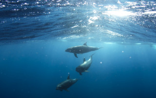 dolphins-918752_1920